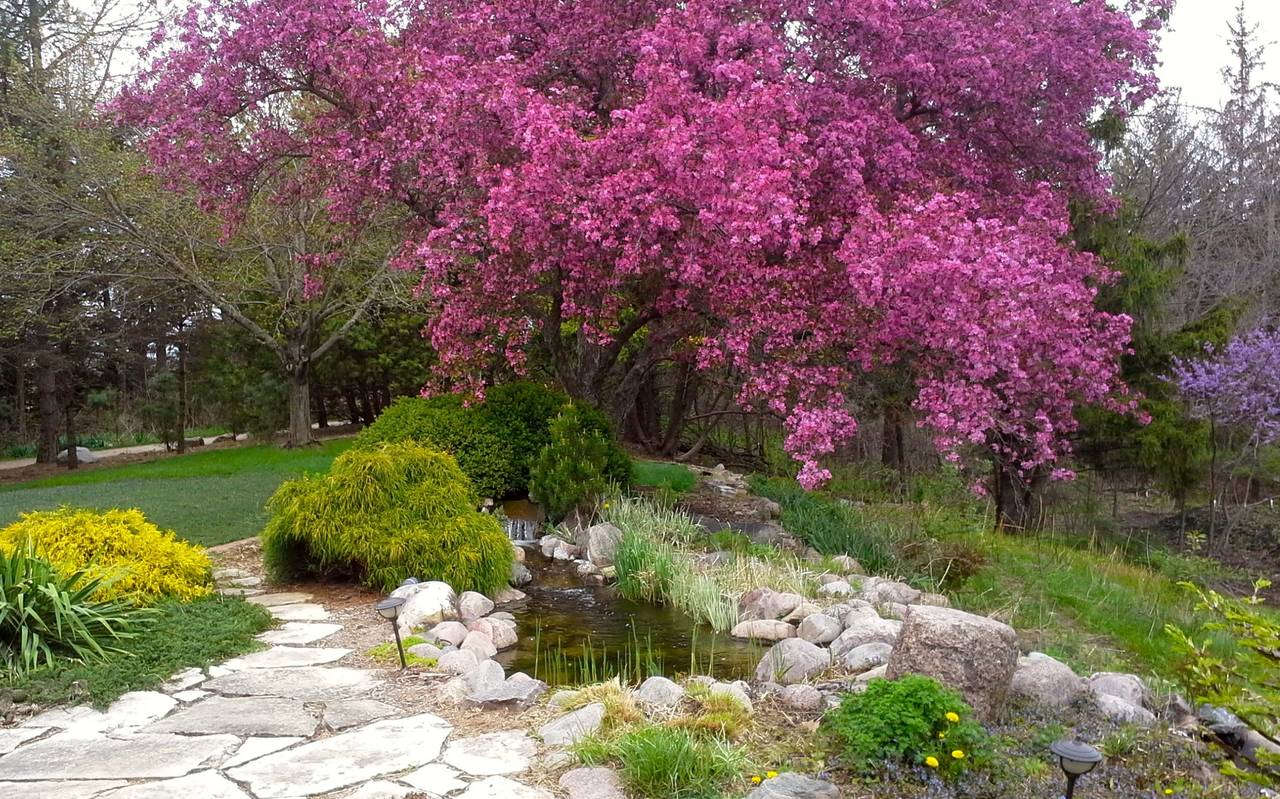 Water garden upper pool in spring.